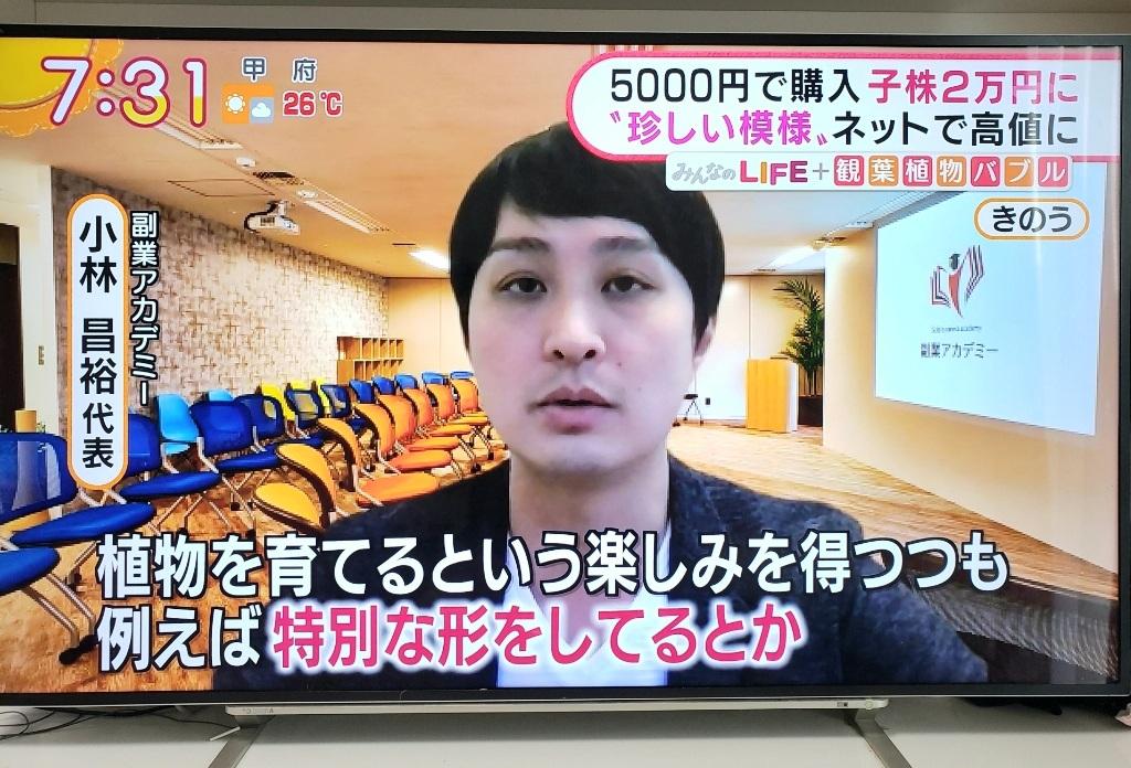 テレビ掲載画像